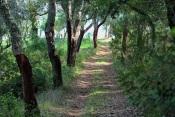 No Alentejo vão nascer mais de 180 quilómetros para caminhadas