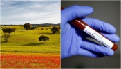 COVID-19/Dados DGS: Alentejo regista mais um caso de infeção