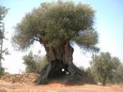 Respeito e perplexidade são inevitáveis quando se observa um dos seres vivos mais antigos de Portugal