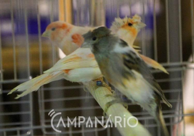 """Cerca de """"mil aves"""" em exposição no III Ibero Aves Elvas, avança Presidente da A.O.E (c/som e fotos)"""