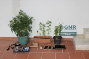 Homem de 43 anos detido por tráfico de droga em Moura