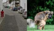 Vila Viçosa limpa de dejetos animais após alteração ao regulamento de resíduos urbanos