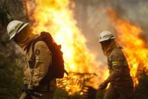 Concelhos do distrito de Portalegre estão esta terça-feira em risco máximo de incêndio