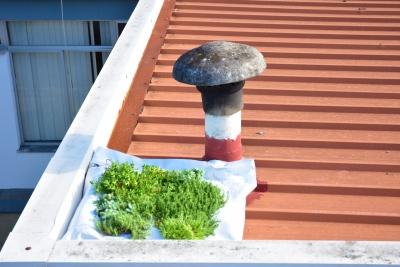 Escola EB Horta das Figueiras (Évora) uma das três escolas escolhidas para projeto Europeu que visa o combate às alterações climáticas