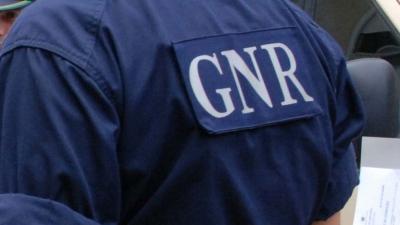 GNR de Monforte recupera 19 cães, dos quais 17 sem chip