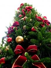 Governo pondera limitar o número de pessoas reunidas no Natal