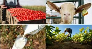Universidade de Évora em projeto de 5M€ para criação de Centro de Excelência para a Agricultura e a Agro-Indústria