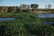 Verdes Recomendam Elaboração de Plano de Ação de  Controlo do Jacinto-de-água