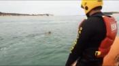Cão de raça Labrador foi hoje salvo por elementos da Estação de Salva-Vidas de Sines