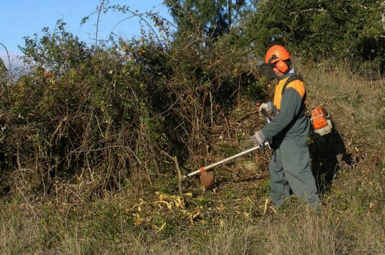 Apenas 1 município alentejano garante a limpeza total dos terrenos de acordo com a lei do Governo