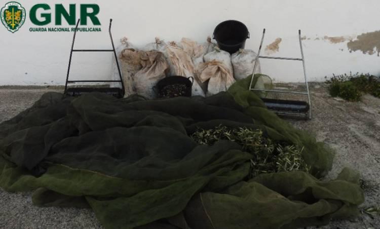 Mais de 20 pessoas detidas em flagrante delito por furto de azeitona no Alto Alentejo