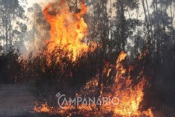 Incêndio em Ferreira do Alentejo mobiliza 28 operacionais e 1 meio aéreo