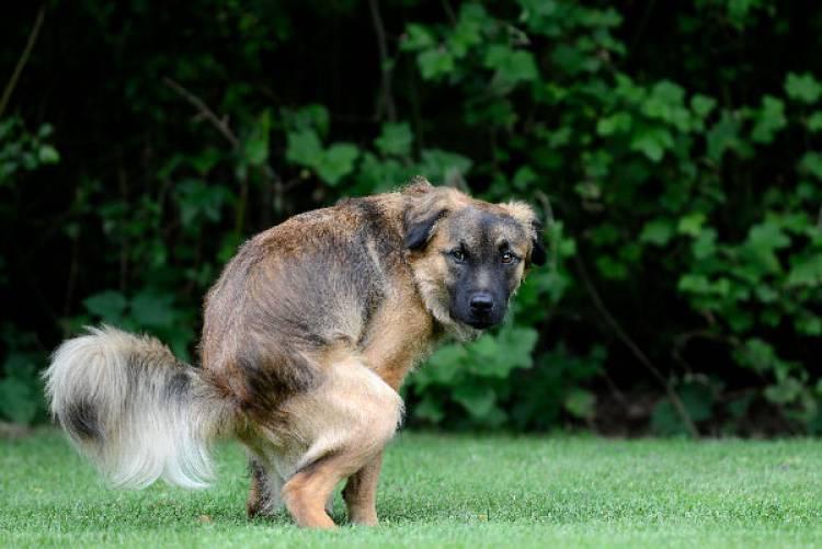 Tolerância zero para dejetos de cães na via pública em Vila Viçosa a partir de 1 de Fevereiro
