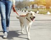 Vai fazer exercício ou passear o cão? As exceções ao recolhimento domiciliário obrigam a apresentar comprovativo