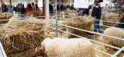 Ovibeja: Ambiente da feira agropecuária recriado em versão digital