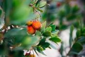 Mértola: Outubro é mês de celebrar os Recursos Silvestres do Alentejo