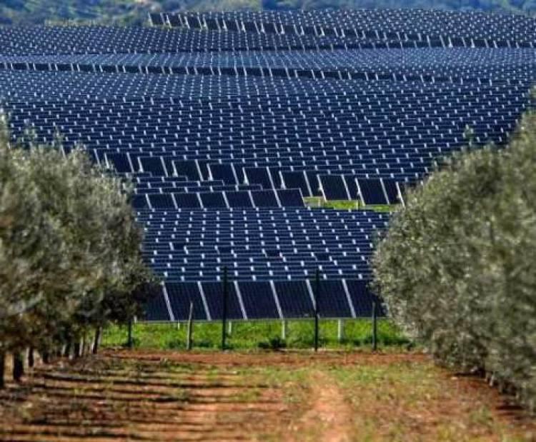 Investimento em centrais fotovoltaicas no Alentejo pode ascender a 500 milhões de euros