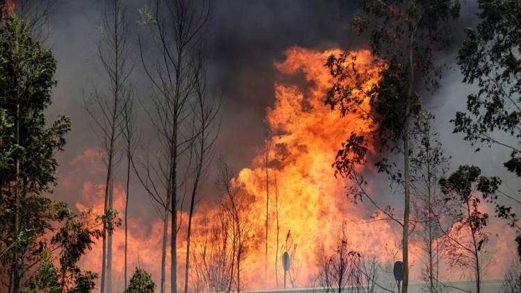 Incêndio no Monte das Arengosinhas, no concelho Vila Viçosa