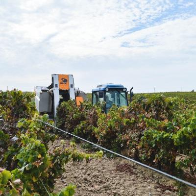 Em tempo de vindima, Adega Cooperativa de Redondo mostra moderna tecnologia na colheita das uvas