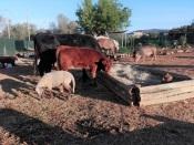 Portalegre vai acolher santuário de animais que abandona o Algarve por falta de espaço