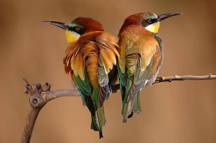 Elvas promove 72º Campeonato Nacional de Ornitologia