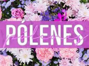 Évora vai ser uma das cidades com níveis mais elevados de pólenes até ao final do mês
