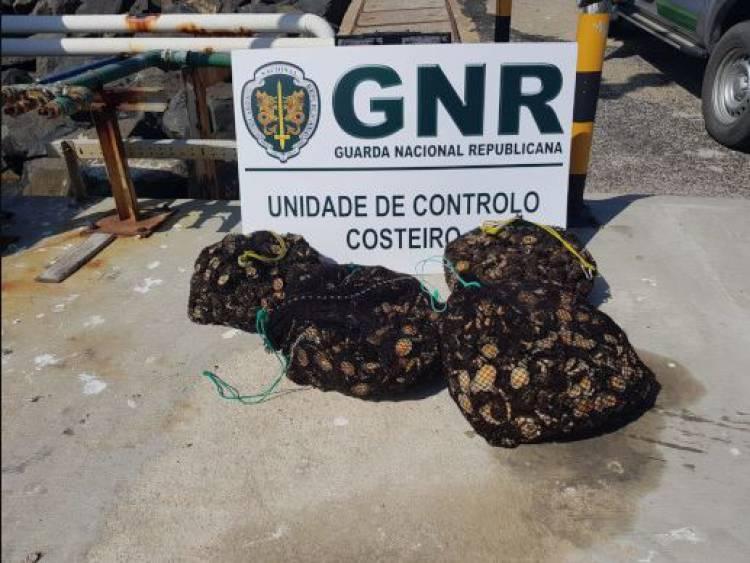 GNR apanha mariscador a recolher lapas sujeitas a proibição temporária no litoral alentejano