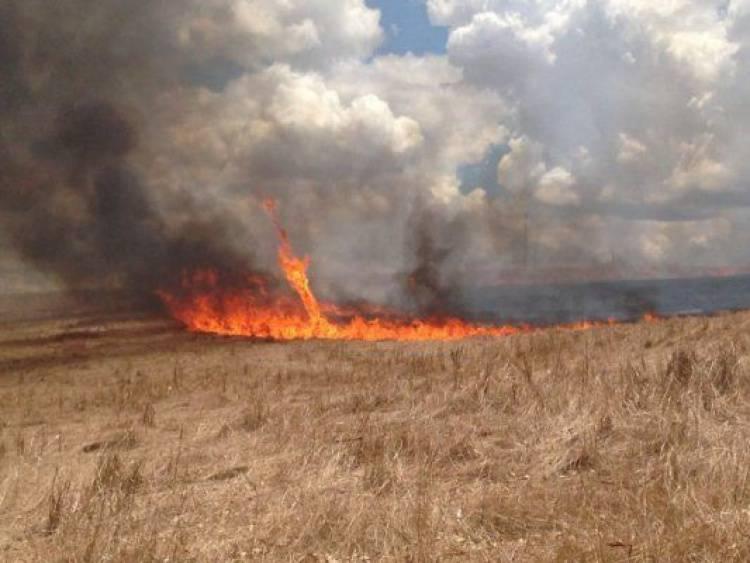 Incêndio agrícola em Borba mobiliza 15 operacionais