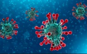 COVID-19: 345 mortes confirmadas e 12442 casos de infeção