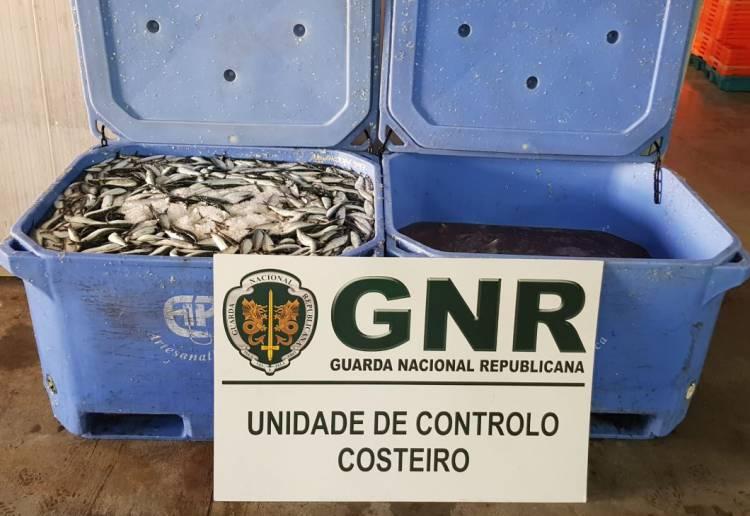 Sines: Pescador identificado e pescado apreendido após ultrapassar cota de pesca
