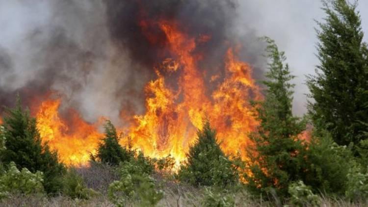 Incêndio em S. Romão mobiliza mais de meia centena de bombeiros