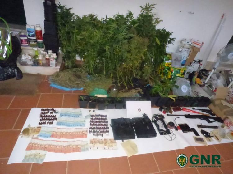 GNR põe fim a grupo criminoso que produzia e traficava droga no Baixo Alentejo