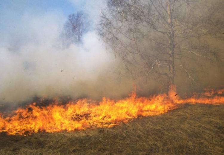 Chamas devastaram esta segunda-feira cerca de 1400m2no distrito de Évora (c/som)