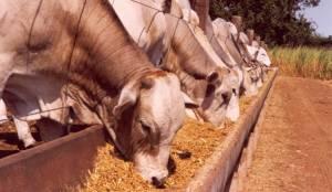 AJASUL elabora projeto de novo parque de leilões de gado para Évora