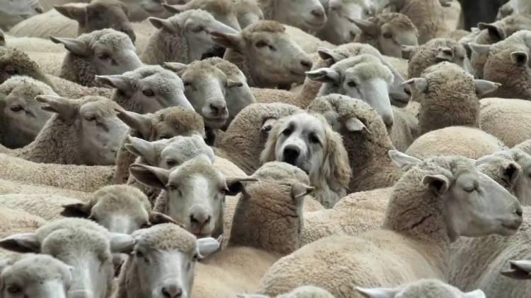 Agricultores do Sul exportaram mais de 9 mil animais com serviço em fase experimental