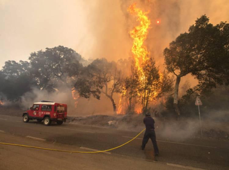 Incêndio consumiu 16 hectares esta terça-feira, no distrito de Évora (c/som)