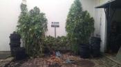 Odemira: Dois homens detidos por tráfico de estupefacientes. Apreendidas 27 plantas de cannabis