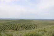 CM de Sousel coloca Plano Municipal de Defesa da Floresta Contra Incêndios 2020-2029 em audição pública