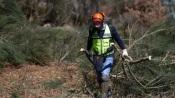 Prazos para a limpeza obrigatória de terrenos vão ser prolongados