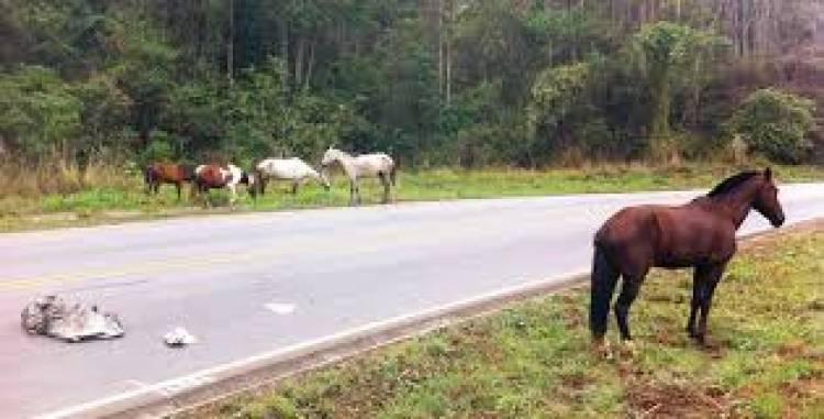 Beja: PSP recolhe 5 cavalos junto ao IP8
