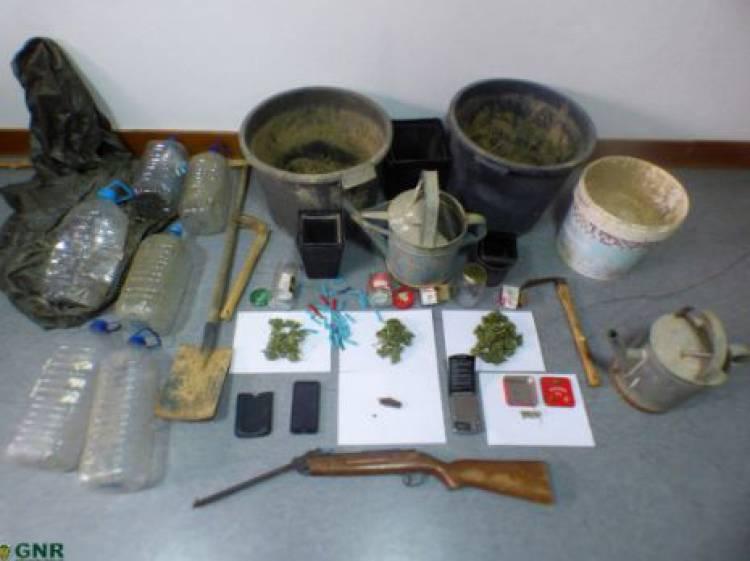 Dois homens detidos por tráfico e cultivo de canábis em Aljustrel