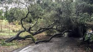 Mau tempo derrubou dezenas de árvores no Alentejo e obrigou à mobilização de mais de 90 operacionais