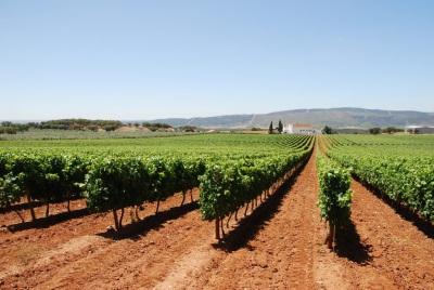 Produtores vinícolas do Alentejo reúnem-se em plataforma de venda online