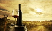 Alentejo será das regiões com maior subida de produção de vinho