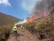 ICNF realiza ações de fogo controlado no Parque Natural da Serra de São Mamede