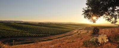 Revista Norte-Americana elege Alentejo como um dos seis melhores destinos vinícolas do mundo