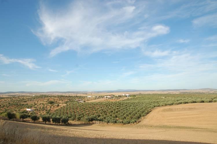 Alentejo vai ter uma vila sustentável para acolher refugiados (c/som)