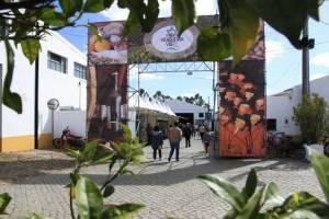 Vidigueira promove vinhos da região