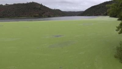 Gavião: Rio Tejo coberto com um manto verde fluorescente