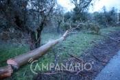 Vento forte provoca queda de árvores nos concelhos de Redondo, Marvão, Portalegre e Elvas